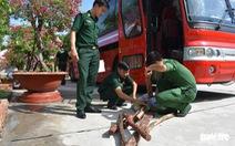 Xe khách chở 3.200kg gỗ trắc từ Campuchia về Việt Nam