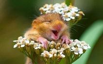 Đừng tưởng chỉ con người mới biết cười!