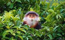 'Hòn ngọc' Sơn Trà và giá trị bảo tồn tự nhiên