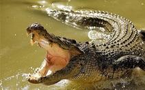 Ông bố xả thân cứu con trai khỏi hàm cá sấu