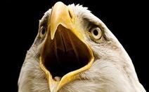 Vì sao chim không có răng mà có mỏ?