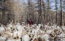 Cuộc sống của bộ tộc chăn tuần lộc cuối cùng ở Mông Cổ