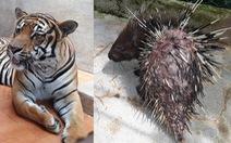 Khu du lịch thác Prenn Đà Lạt bị tố ngược đãi động vật