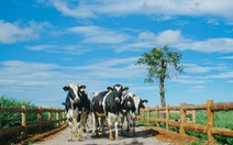 Vinamilk được bình chọn thương hiệu số 1 Việt Nam