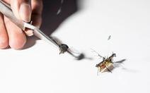 Chế tạo thành công ruồi robot theo dõi cây trồng