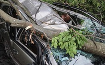 Ôtô bẹp dúm dưới cây xà cừ bật gốc trong mưa