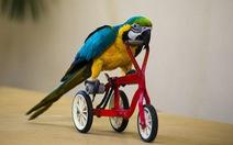 Cip hài: Chim mà biết giỡn sóng và đạp... xích lô