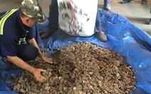 Trong lô hàng hạt điều có 3,3 tấn vảy tê tê