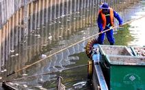 Cá chết nổi nhiều ở kênh Nhiêu Lộc - Thị Nghè