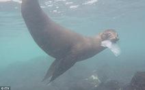Giật mình rác nhựa 'tấn công' quần đảo có 1.300 loài đặc hữu