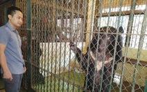 Hạn chế nuôi thú hoang dã làm trò: Khó dẹp được xiếc thú