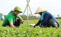 Hai bạn trẻ khởi nghiệp với bột rau từ nguyên liệu sạch