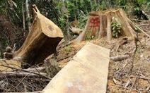 Một tháng 200 vụ phá rừng, 'điểm nóng' ở Đắk Nông, Điện Biên