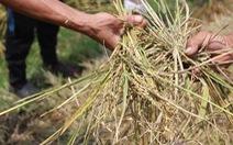 Huy động công an ngăn chặn nạn 'bảo kê' gặt lúa