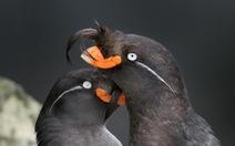 Lạ lùng loài chim tỏa mùi hương như vỏ cam, quýt