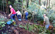 Bảo vệ trại sâm gốc Tăk Ngo trên đỉnh Ngọc Linh
