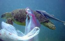 Nhiều rác thải nhựa trong dạ dày một con rùa xanh tại Thái Lan