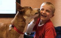 Cậu bé 6 tuổi cứu hơn 1.000 chú chó
