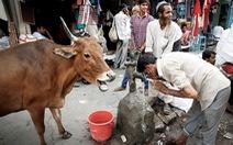 Ấn Độ khủng hoảng nước, hàng trăm triệu người điêu đứng