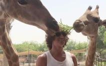 Hươu cao cổ ăn nhầm mái tóc David Luiz