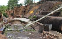 Cây rừng mục ngã đè du khách 9 tuổi tử vong