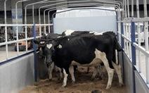 Vinamilk nhập lô bò A2 thuần chủng từ New Zealand