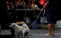 Thế giới trong tuần qua ảnh: lễ hội ăn thịt chó ở Trung Quốc