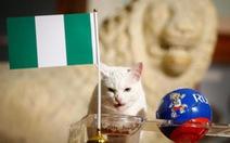 Tiên tri mèo điếc Achilles đoán Messi phải rời World Cup sau đêm nay