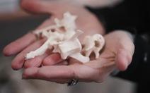 Jamie Roadkill: người tạo ra tác phẩm nghệ thuật từ xác động vật bị xe cán