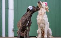 Ngắm những bức ảnh đám cưới...chó dễ thương vô đối