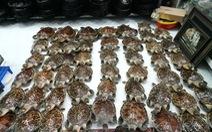 Điều tra vụ 72 tiêu bản rùa biển quý hiếm trong cửa hàng mỹ nghệ