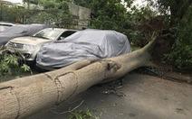 Nhiều cây xanh ngã đổ trong dông gió ở Sài Gòn