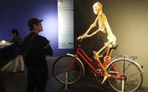 Cục Mỹ thuật: Cơ thể người nhựa hóa không phù hợp trưng bày đại chúng
