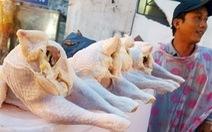 'Gà mái đẻ' 40-50.000đ/kg ở vỉa hè là gà thường dùng cho chó, mèo...