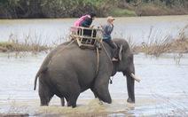 Trả tiền để xem voi hạnh phúc, tại sao không?