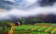 Đừng hi sinh du lịch và hệ sinh thái Đà Lạt
