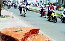 Người Sài Gòn xưa lo phố vắng cây