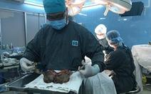 Phẫu thuật thành công khối bướu âm hộ đường kính 30cm