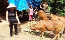Nghệ An bác chuyện trục lợi khi cấp bò lở mồm long móng cho dân