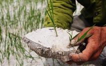 Dân Nghệ An căng mình vét nước cứu lúa