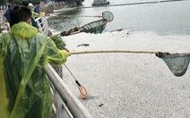 Cá chết ở hồ Tây Hà Nội đã lên tới hàng chục tấn