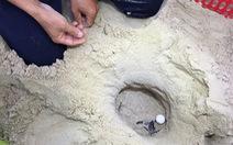 Đưa rùa về lại Cù Lao Chàm: Cái chết của loài rùa