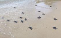 Đưa rùa về lại Cù Lao Chàm: Tái tạo đàn rùa
