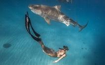 Làm gì để sống sót khi đang bơi gặp cá mập?