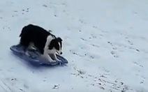 Video chó, ngựa hào hứng trong tuyết phủ trắng ở Mỹ