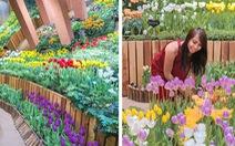 'Cung điện hoa tulip' rực rỡ ở Nhật Bản