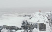Mỹ chìm trong băng giá, động vật hoang dã 'lờ đờ'