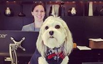 Khách sạn Mỹ 'cho mượn chó cưng' để giải sầu