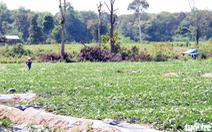 Đắk Lắk cần chuyển đổi gần 12.700 ha rừng để làm dự án