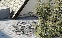 Vây cá mập mua ngoài chợ Chile để sử dụng trong nhà